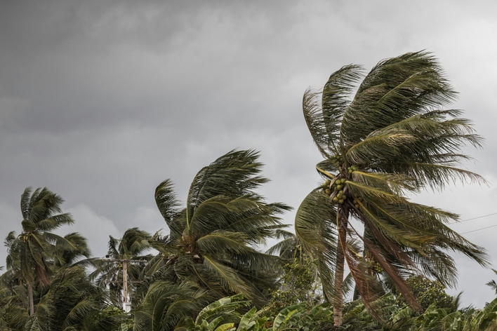 Palm trees blowing in dark stormy weather during hurricane season